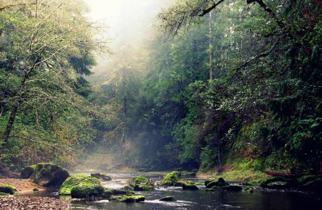 elliott-state-forest-oregon-courtesy-oregon-department-of-forestry